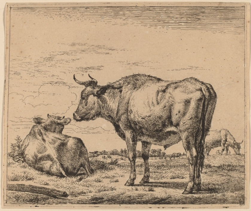 Standing Bull by Adriaen van de Velde (c.1657)